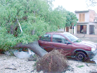 Un árbol aplastó buena parte de un automóvil.