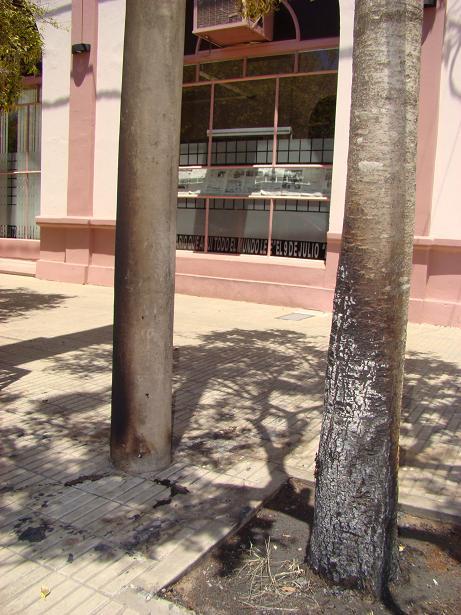 Uno de los árboles quemados, en Vedia y Sarmiento.